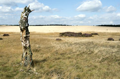 Landscape with a sand drift and a dead birch tree. Royalty Free Stock Photos