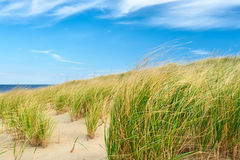 Landscape with sand dunes at Cape Cod Stock Image