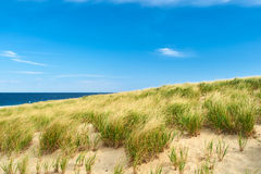 Landscape with sand dunes at Cape Cod Stock Images