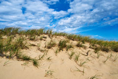 Landscape with sand dunes at Cape Cod Royalty Free Stock Image