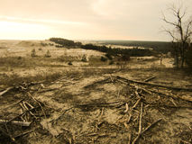 Landscape with sand dunes. Felled trees and a cold sun Royalty Free Stock Image