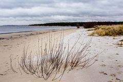 Landscape on the sandy shores Stock Image