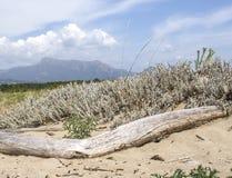 Landscape. With sandy vegetation Stock Images