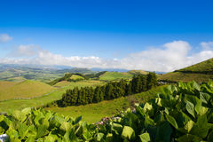The landscape on Sao Miguel, Azores Royalty Free Stock Image