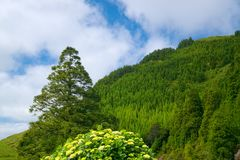 Landscape on Sao Miguel island, Azores, Portugal stock photo