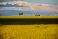Landscape with savannah trees in Africa, Safari. Kenya Stock Image
