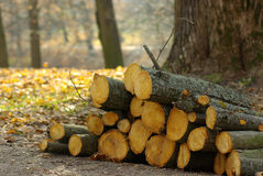 Landscape with a sawn logs , deforestation, Stock Photography