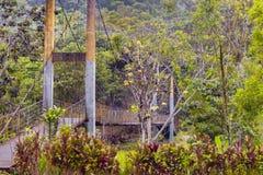 Landscape scene in the Amazonia Ecuadorian side. Stock Photo