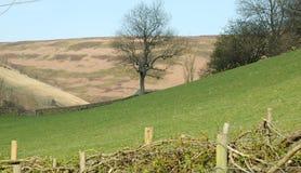 Landscape Scene Stock Image