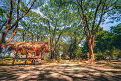 Hut in forest with sun shade on ground. Landscape scenery of hut in forest with sun shade on ground stock illustration