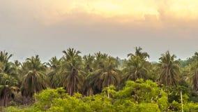Landscape scenery. Palm trees landscape nature Stock Photography