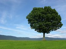 Landscape scenery with solitary tree. An blue sky Stock Image