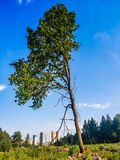 landscape scenery of stand alone tree on grass field stock photography