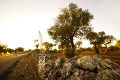Landscape with Scilla Maritima Stock Photos