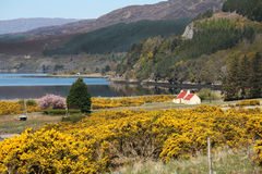 Scottish Highlands, Scotland, UK Royalty Free Stock Photo
