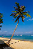Landscape the sea, the boat, a palm tree in  Phuket Royalty Free Stock Photos
