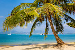 Landscape the sea, the boat, a palm tree in  Phuket Stock Image