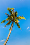 Landscape the sea, the boat, a palm tree in  Phuket Royalty Free Stock Images
