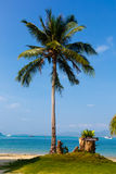 Landscape the sea, the boat, a palm tree in  Phuket Royalty Free Stock Photography
