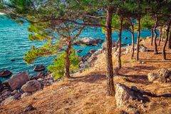 Landscape with sea and coast with pine forest royalty free stock photo