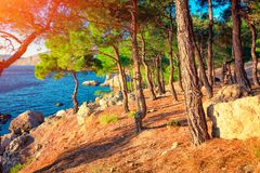Landscape with sea coast with pine forest at sunset royalty free stock photography