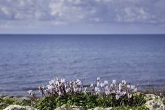 Landscape with sea and flowers. Beautiful landscape with white flowers and coast with rocks and gravel. Travel in Cyprus. Spring vacations. Cloudy sky. Sea stock image