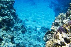 Landscape of the seabed with coral. Reef stock image