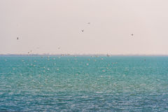 Landscape. Seagulls over the water in the Ebro Delta, Tarragona, Catalunya, Spain. Copy space for text. Landscape. Seagulls over the water in the Ebro Delta Royalty Free Stock Image