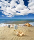 Landscape with seashell and stones on background. Landscape with seashell and stones on sky background Stock Image