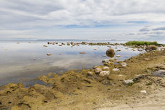 Landscape of a seashore full of rocks. Coastal landscape with yellowish algae at foreground and large rocks in background Stock Image