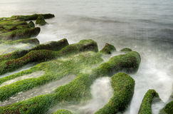 Landscape of seaweed coast Royalty Free Stock Images