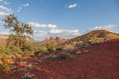 Landscape of Sedona Arizona Royalty Free Stock Image