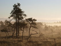 Landscape of Seli Bog. Dawn royalty free stock photos