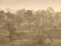 Landscape of Seli Bog Stock Images