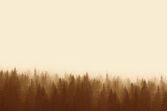 Landscape in sepia - pine forest in mountains with fog Stock Photo