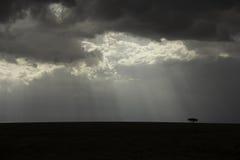 landscape serengeti Стоковые Фотографии RF