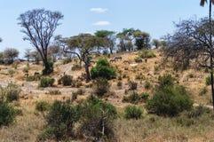 landscape serengeti Стоковое Фото