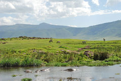 Landscape of Serengeti, Tanzania Royalty Free Stock Images