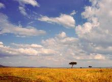 landscape serengetien Arkivbild