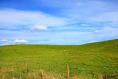 Landscape with sheep Royalty Free Stock Image