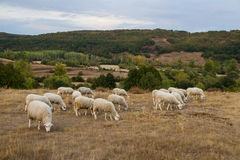 Landscape with Sheep Stock Photography