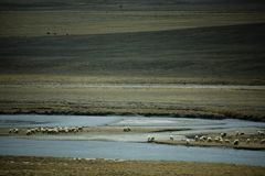 Landscape with sheep and river Royalty Free Stock Photo