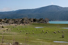 Landscape with sheeps. Stock Photo