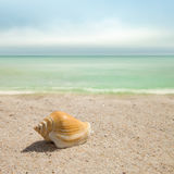 Landscape with shells on sandy beach. Sea shells with sand background Stock Photo