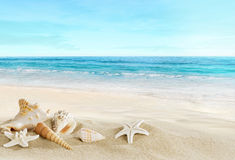 Landscape with shells on tropical beach Royalty Free Stock Images