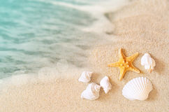 Landscape with shells on tropical beach. Landscape with starfish and shells on tropical beach Stock Photography