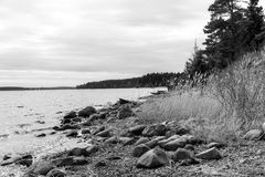Landscape on shores of Lake Ladoga Stock Images