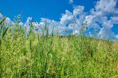 Landscape shot - meadow in summer. With beautiful plants royalty free stock image