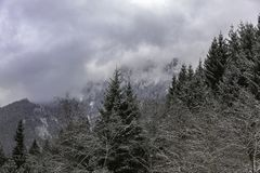 Landscape shot of mountains and forests. In winter time royalty free stock photo