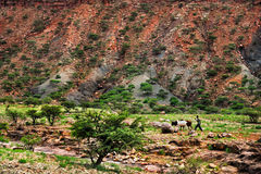 Landscape shot in Tigray province, Ethiopia, Africa Royalty Free Stock Images